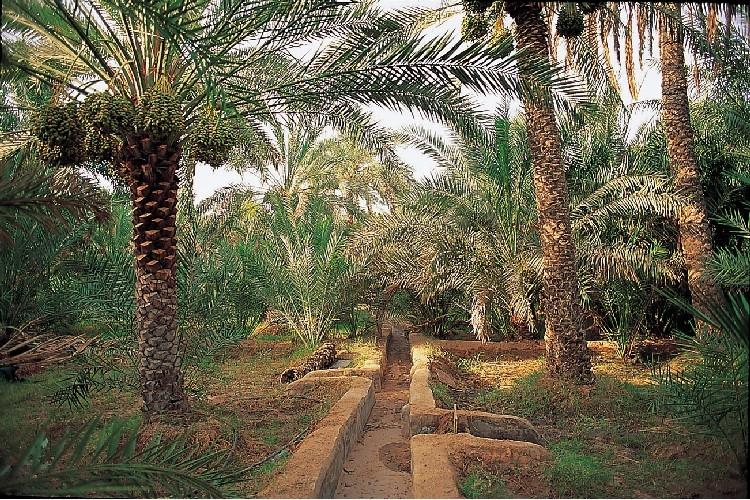 Cosa vedere ad Abu-dhabi
